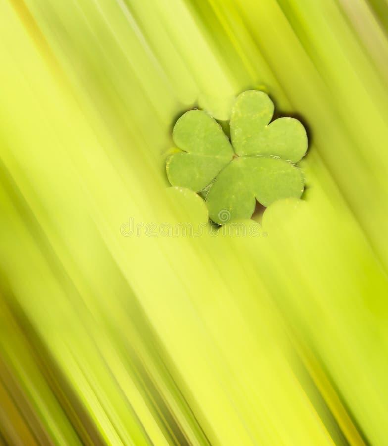 Abstrakte Leaved Klee des Shamrock-vier auf grünem Hintergrund lizenzfreies stockbild
