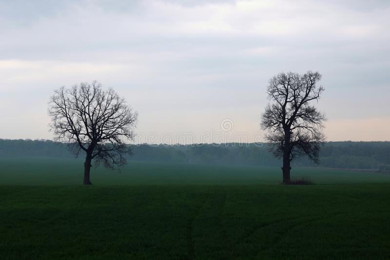 Abstrakte mystische Frühlingslandschaft mit hellem Nebel im wolkigen Wetter von zwei Bäumen ohne Blätter gegen Hintergrund von Bä stockfoto