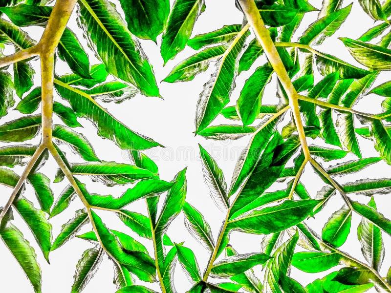 Abstrakte Oberfläche des Grüns lässt Muster auf weißem Hintergrund lizenzfreie stockbilder