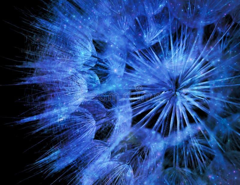 Abstrakte Schließung glitzernder blauer Lüsternsamen auf schwarzem Grund isoliert stockfotos