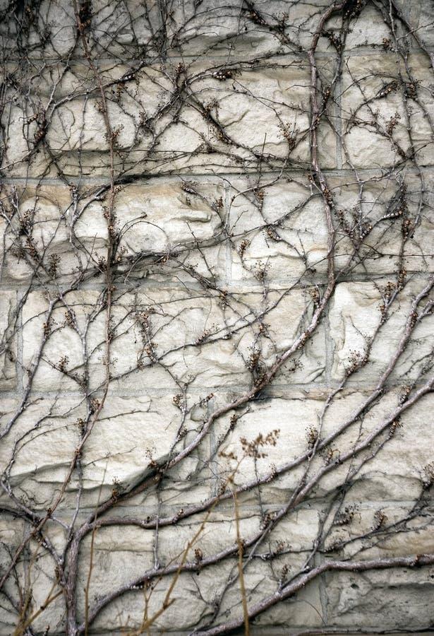 Abstrakte strukturierte dekorative Hintergründe lizenzfreie stockfotos