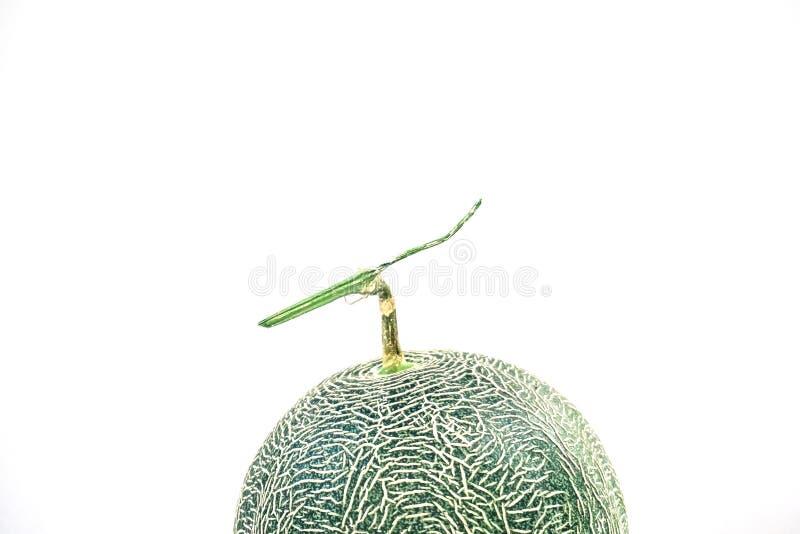 Abstrakter Abschluss oben der Kantalupenmelonenbeschaffenheit, schließen herauf frische süße Scheibenmelonenkantalupe auf dem Hol stockbild