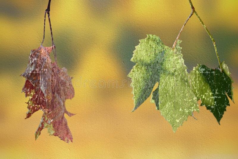 Abstrakter Begriff des Leben oder Tod mit Blättern stockfotografie