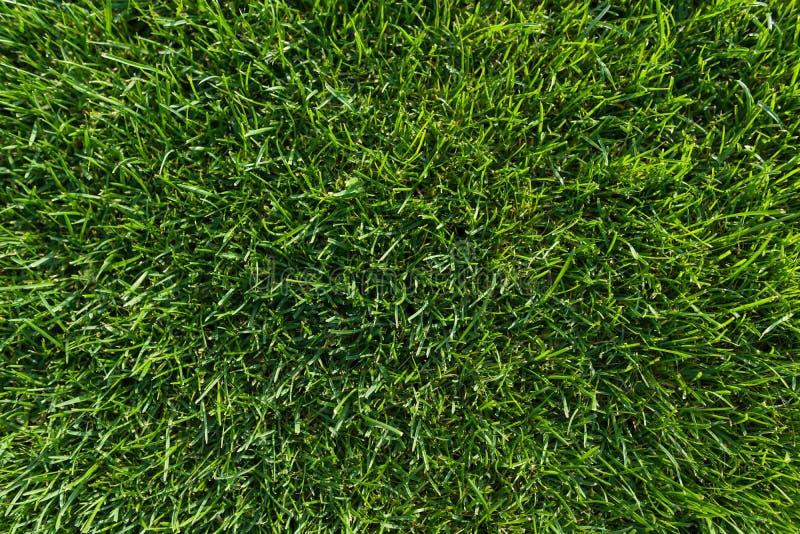 Abstrakter Beschaffenheitshintergrund, natürlicher hellgrüner Grasnahaufnahme-Rasenteppich, Draufsicht stockfoto