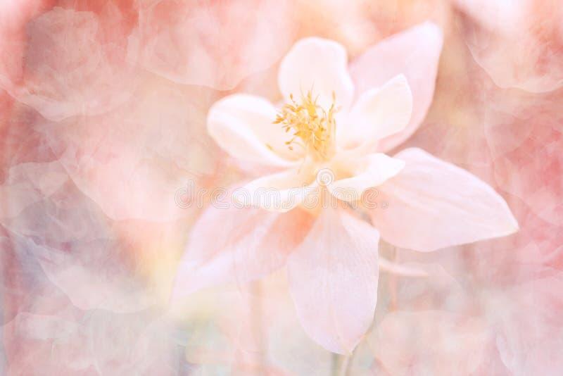 Abstrakter Blumenhintergrund mit einer Beschaffenheit Schöne Pastellfarben Weicher vorgewählter Fokus lizenzfreie stockfotos