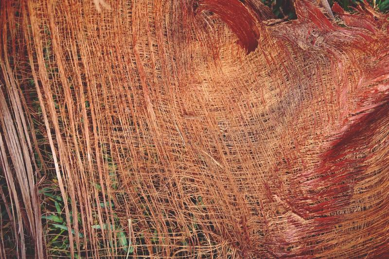Abstrakter getrockneter Palmenbeschaffenheits-Hintergrundabschluß oben stockfotos
