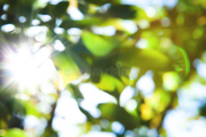 Abstrakter gr?ner Natur-Hintergrund lizenzfreie stockfotografie
