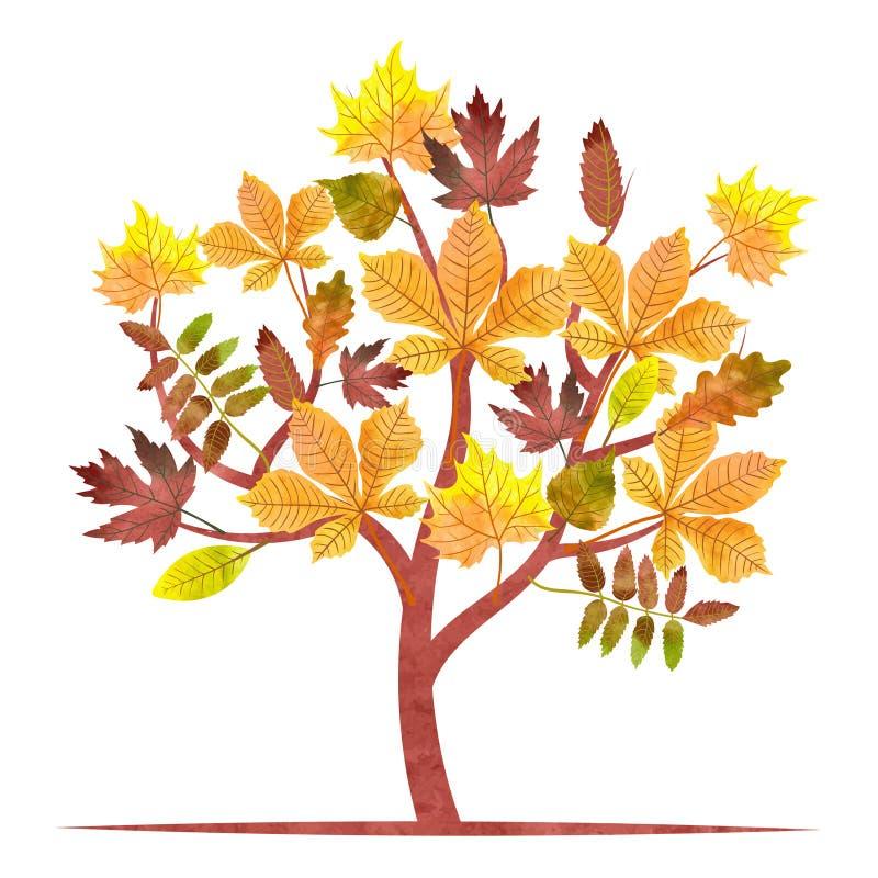 Abstrakter Herbstbaum mit Aquarellahorn, Eiche, Kastanie verlässt vektor abbildung