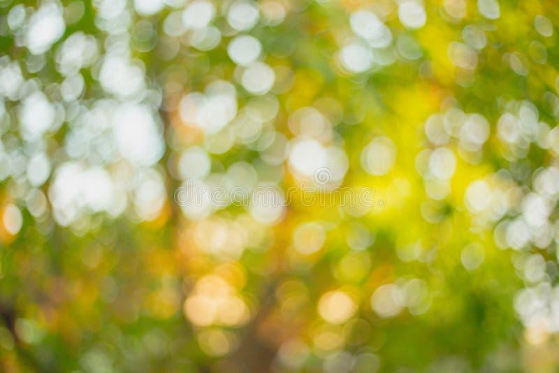 Abstrakter Hintergrund des Baums im Herbstlaub Natur unscharfes Muster De fokussierten Beschaffenheit und buntes vom Baum stockbilder