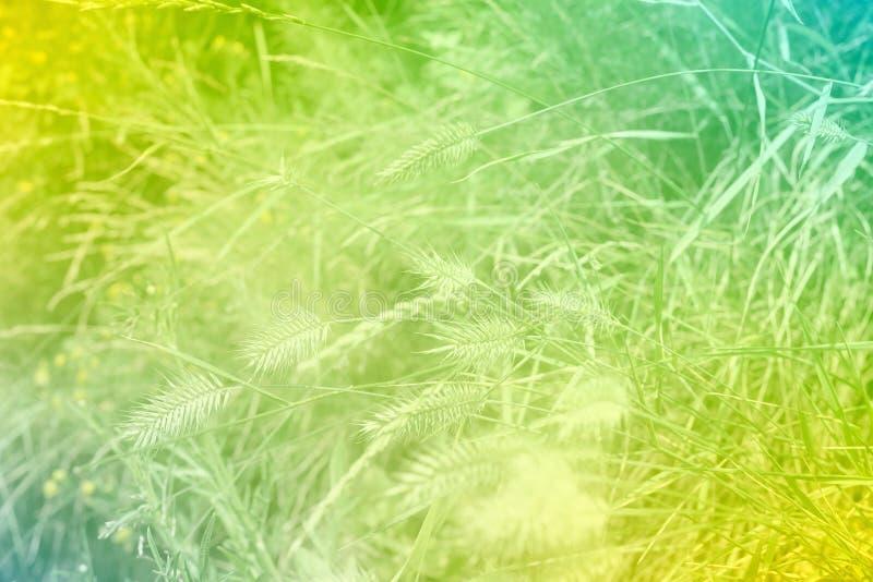Abstrakter Hintergrund des grünen Grases mit Farbfiltern stockbilder