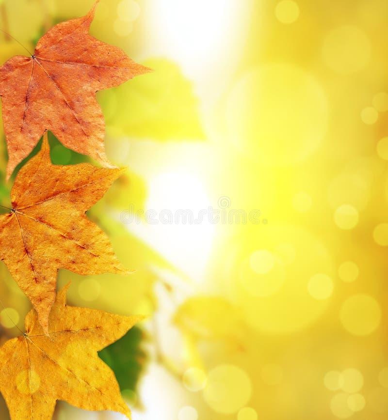 Abstrakter Hintergrund des Herbstes stockbilder