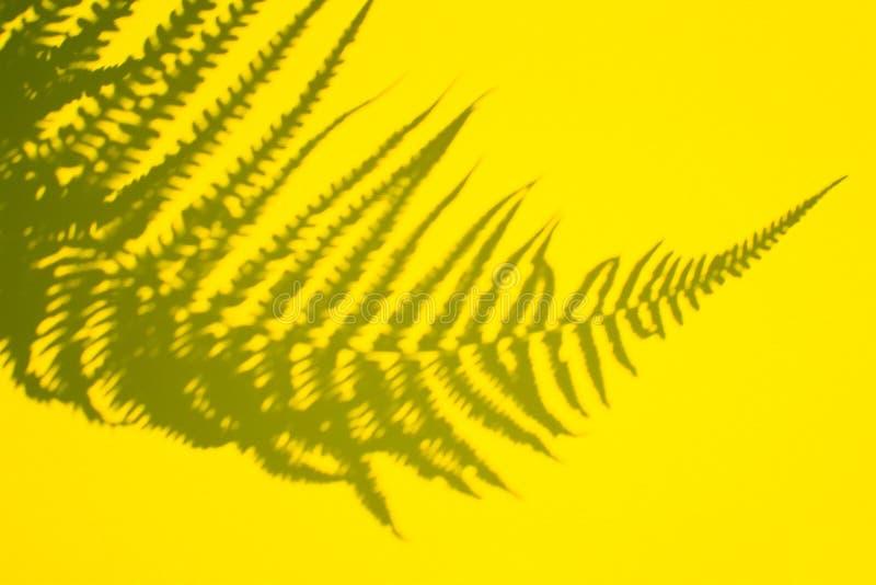Abstrakter Hintergrund des Schattens eines Farnblattes auf einem blauen Hintergrund Kopieren Sie Platz lizenzfreie stockfotos