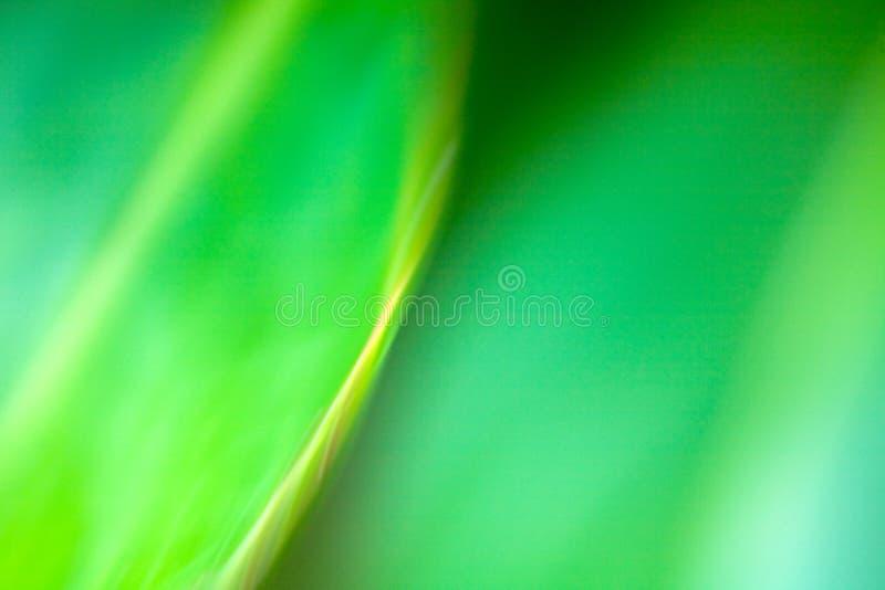 Abstrakter Hintergrund im Grün lizenzfreie stockfotos