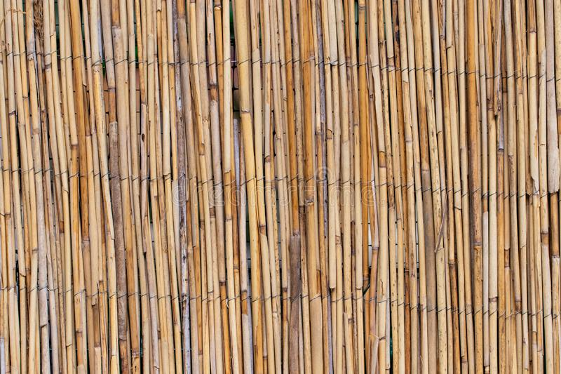 Abstrakter Hintergrund mit Schilfen, Hintergrundbeschaffenheit lizenzfreies stockbild