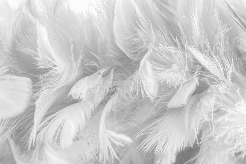 Abstrakter Hintergrundvogel und -hühner versehen Beschaffenheit, Unschärfeart und weiche Farbe des Kunstentwurfs mit Federn stockbilder