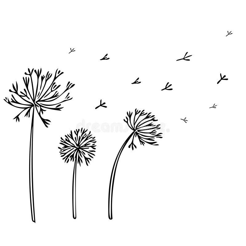 Abstrakter Löwenzahn-Hintergrund mit schwarzen Blumen auf weißem Hintergrund vektor abbildung