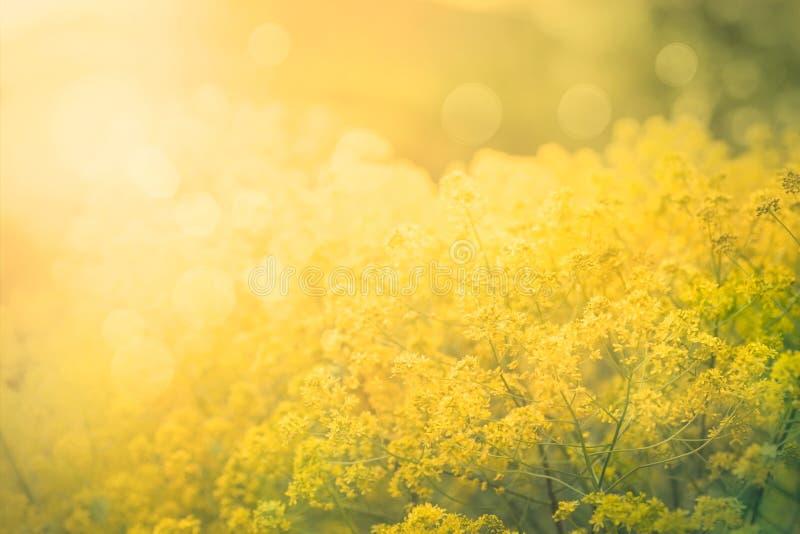 Abstrakter mit Blumenhintergrund lizenzfreie stockfotografie