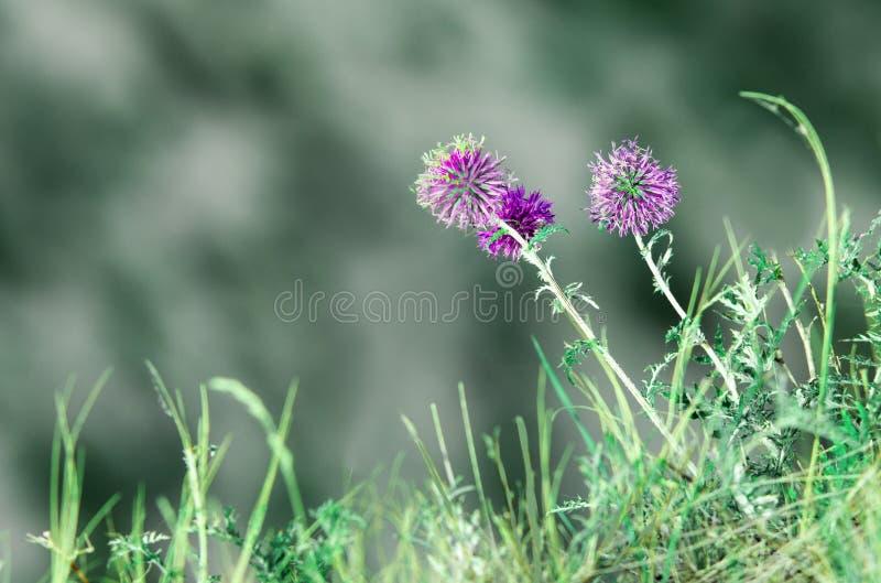 Abstrakter mit Blumenhintergrund des natürlichen Sommers Wald blüht Makro mit Weichzeichnung auf unscharfem hellgrünem Hintergrun stockbild