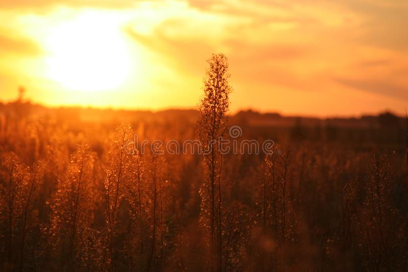 Abstrakter natürlicher Unschärfehintergrund, defocused Blätter, bokeh, Naturhintergrund Verwendet als Hintergrund lizenzfreie stockfotografie