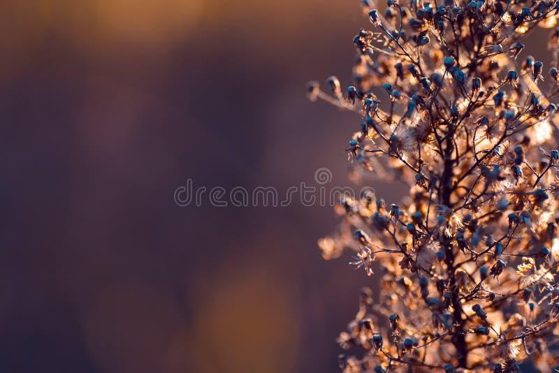 Abstrakter Natur-Hintergrund lizenzfreie stockbilder