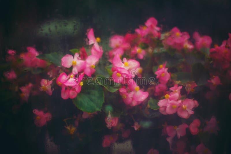 Abstrakter Natur-Hintergrund mit rosa Blumen stockbilder