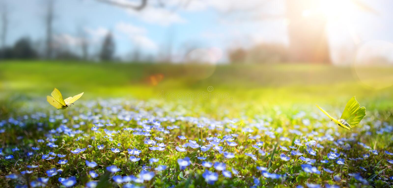 Abstrakter Naturfrühling Hintergrund; Frühlingsblume und -schmetterling lizenzfreies stockfoto