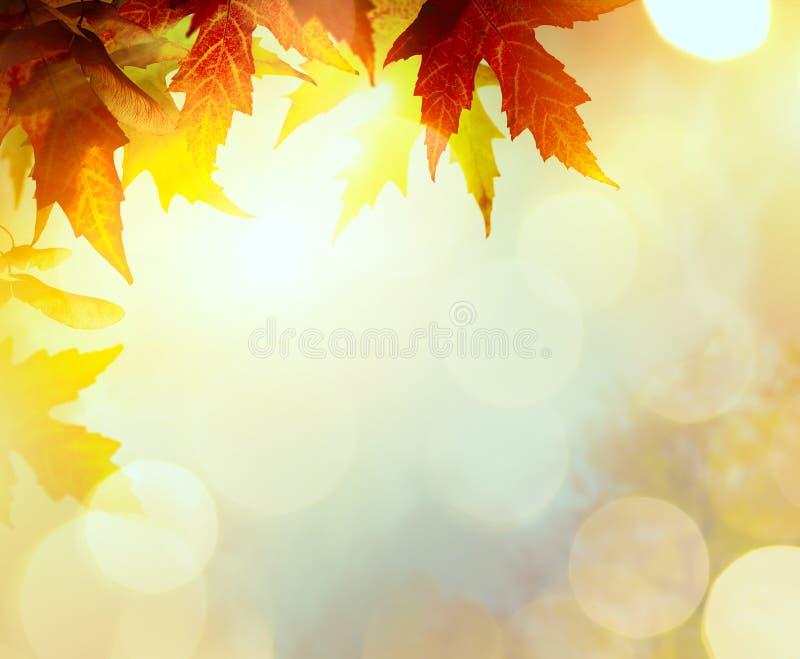 Abstrakter Naturherbst Hintergrund mit gelben Blättern stockfotos