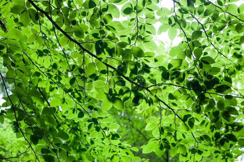 Abstrakter Naturhintergrund mit frischen Blättern stockfoto