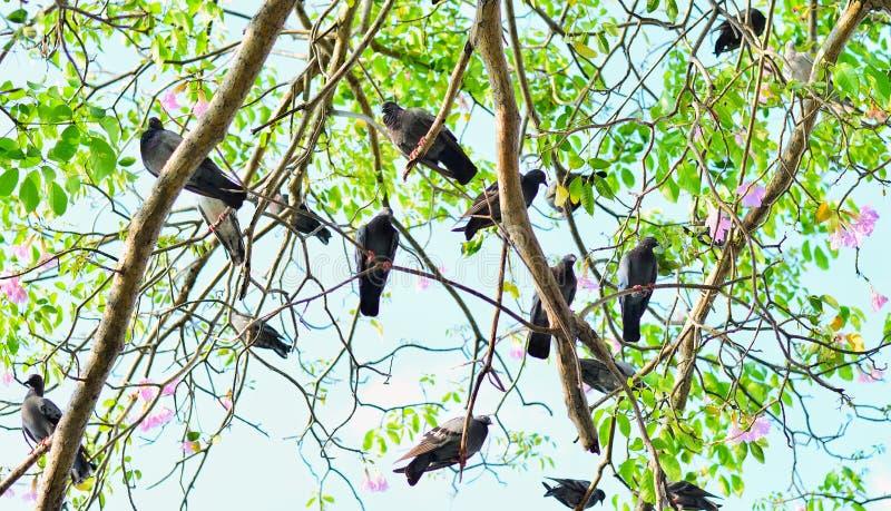 Abstrakter Naturhintergrund mit Vögeln und Bäumen stockfotografie