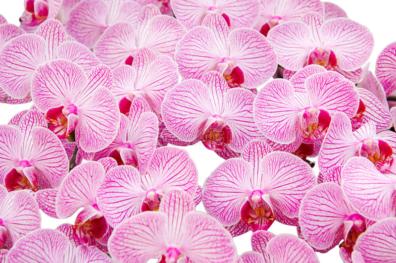 Abstrakter Orchideehintergrund lizenzfreie stockfotografie