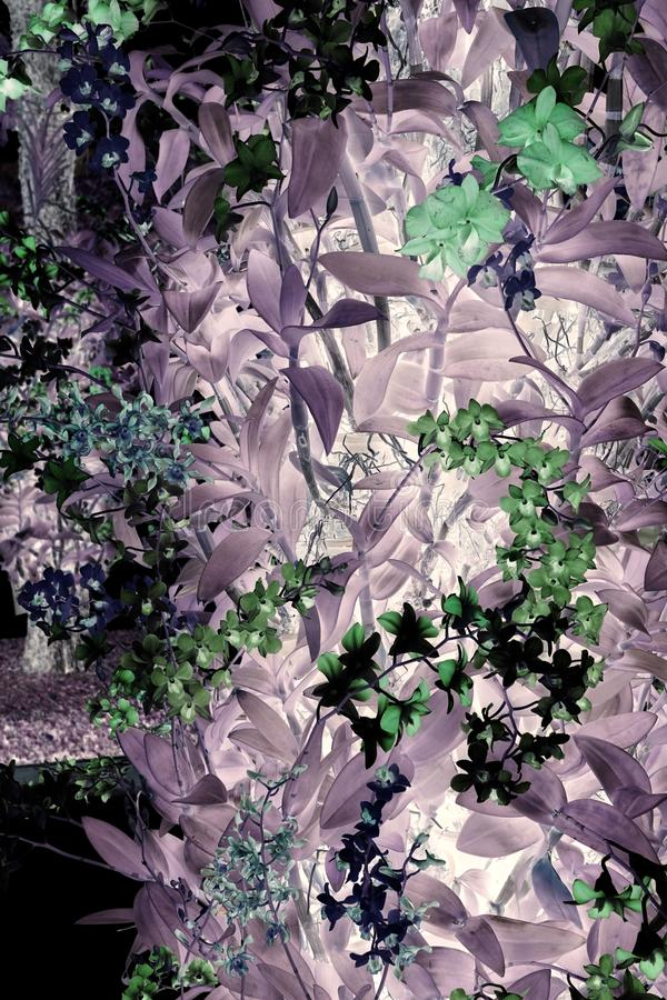 Abstrakter orchideenbaum stockfoto