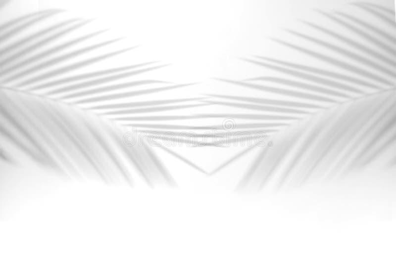 Abstrakter Schatten unscharfer Schattenpalmblatthintergrund graue Blätter, die Betonmauern auf einer weißen Wandoberfläche für re lizenzfreie abbildung