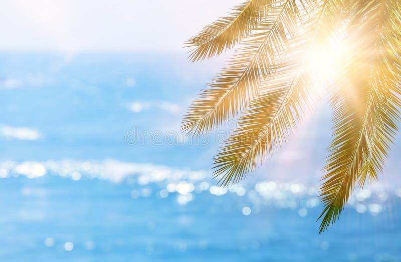 Abstrakter Sommerferien- und -feiertagshintergrund mit natürlichem grünem Palmblatt über bokeh tropischen Meereswellen Kopieren S stockbilder