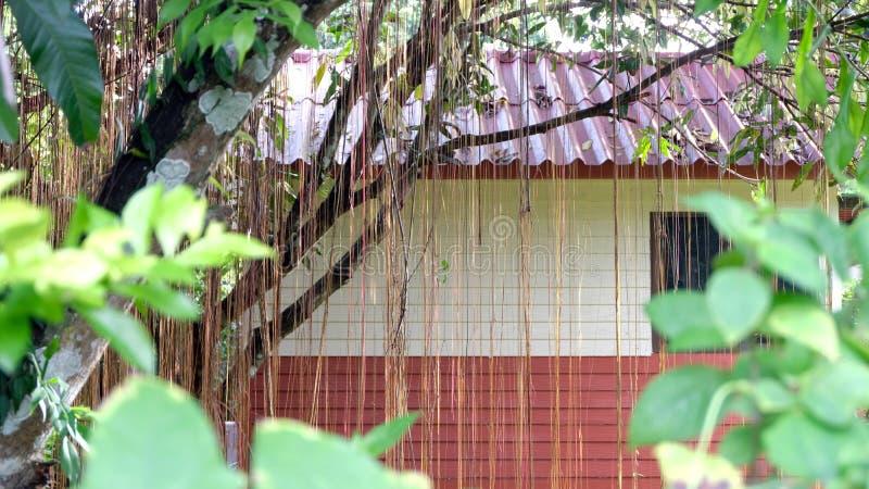 Abstraktes Foto der Häuser im Wald bedeckt mit Reben und großen Bäumen lizenzfreies stockbild