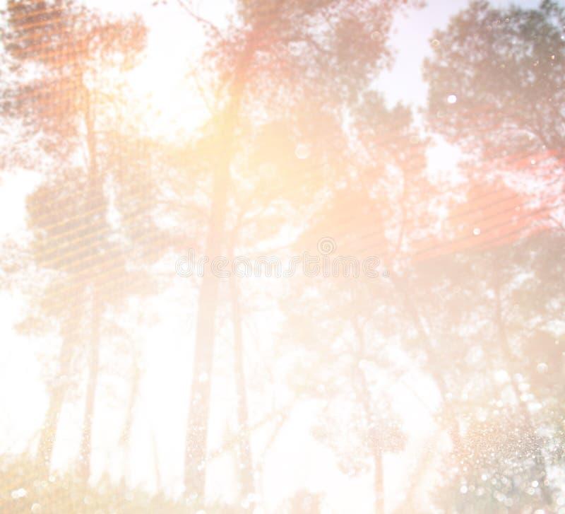 Abstraktes Foto der Lichtexplosion unter Bäumen und Funkeln bokeh beleuchtet Bild wird verwischt und gefiltert lizenzfreie abbildung