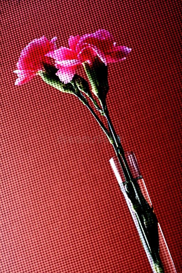 Abstraktes Gartennelken-Hintergrund-Design stockfotografie
