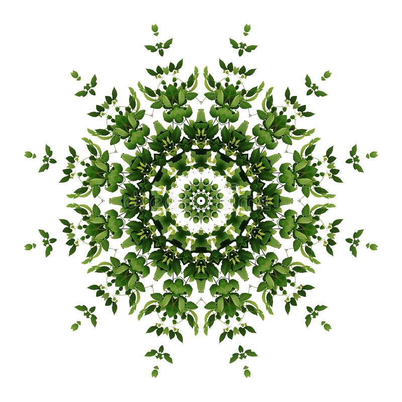 Abstraktes grünes Hintergrundflora-Mandalamuster, wildes kletterndes v lizenzfreies stockfoto