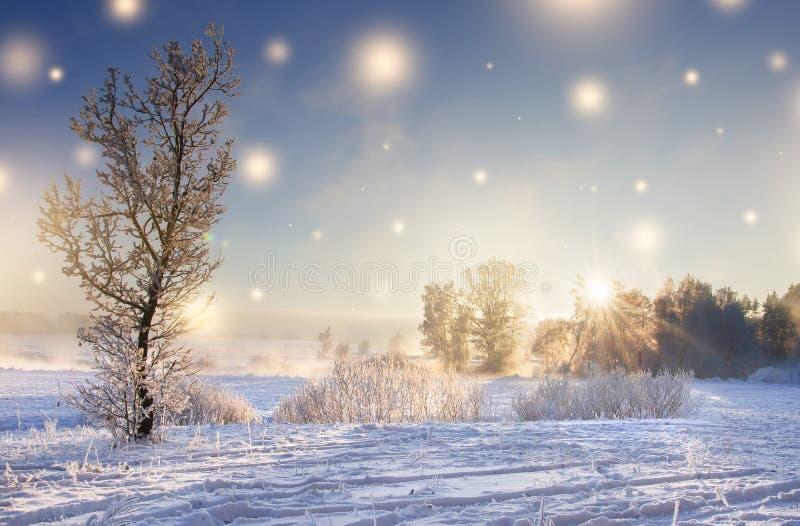 Abstraktes Hintergrundmuster der weißen Sterne auf dunkelroter Auslegung Winternaturlandschaft auf sonnigem Morgen mit glühenden  lizenzfreie stockfotografie