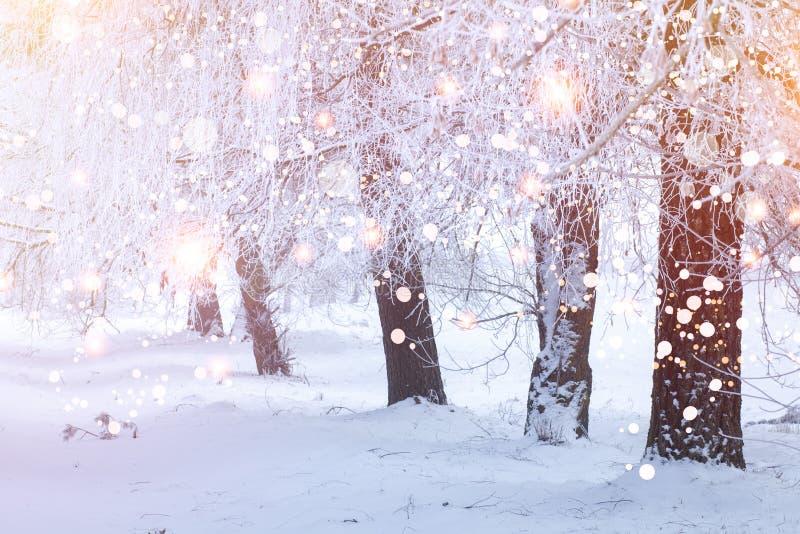 Abstraktes Hintergrundmuster der wei?en Sterne auf dunkelroter Auslegung Snowy-Bäume in der Winterszene mit glühendem bokeh Wald  stockfoto