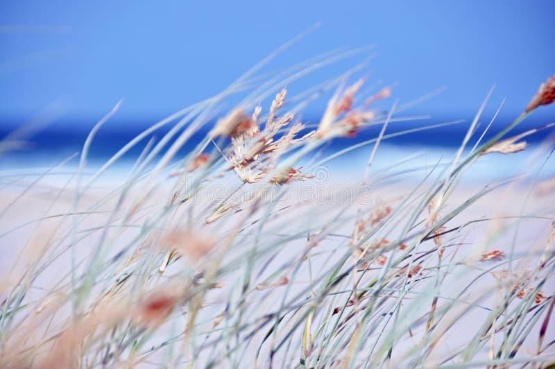 Abstraktes Strand-Ozeanmeer des Hintergrundkonzeptfreien tages lizenzfreie stockfotos