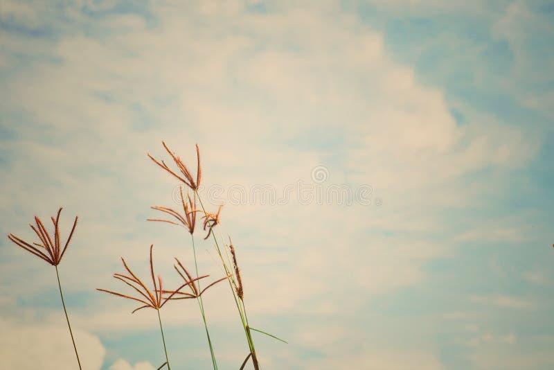 Abstraktes Weinlesebild des Blumengrases und -unkrauts auf dem Gebiet mit blauem Himmel und Wolke im Hintergrund stockfotografie