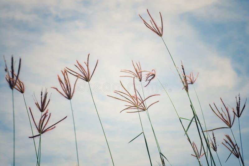 Abstraktes Weinlesebild des Blumengrases und -unkrauts auf dem Gebiet mit blauem Himmel und Wolke im Hintergrund stockfotos