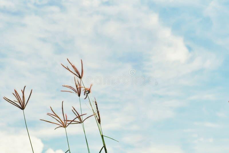 Abstraktes Weinlesebild des Blumengrases und -unkrauts auf dem Gebiet mit blauem Himmel und Wolke im Hintergrund stockbilder