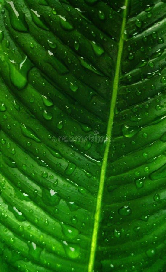 Abstrakty tekstury natura minimalistyczny zielony obrazy stock