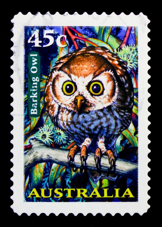 Abstreifen Owl Ninox connivens, nächtliches Tiere serie, circa 1997 stockbild