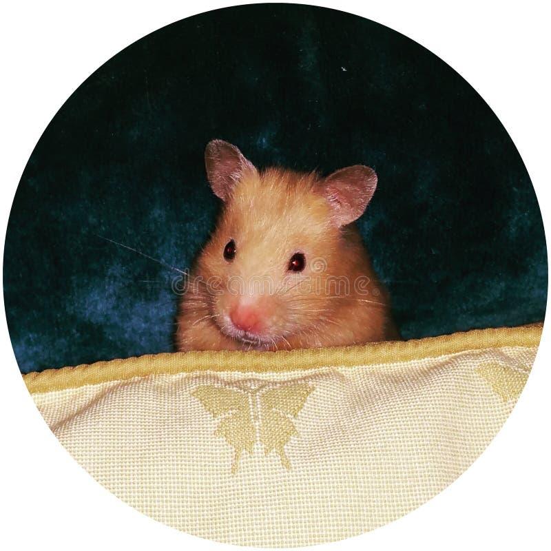 Abtei der Hamster stockbild