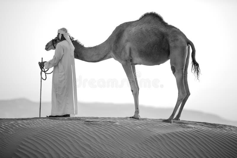 Abu Dhabi wielbłąda pustyni natura dzicy życie konwoje fotografia royalty free