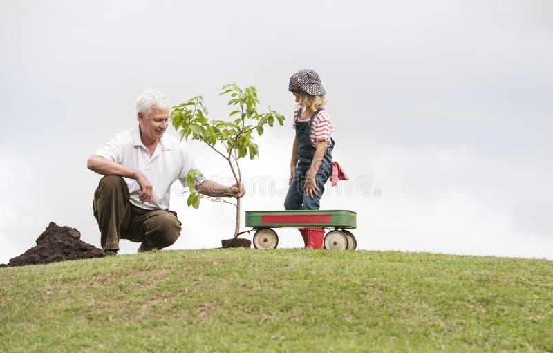 Abuelo y niño que plantan el árbol en unidad de la familia del parque imagenes de archivo