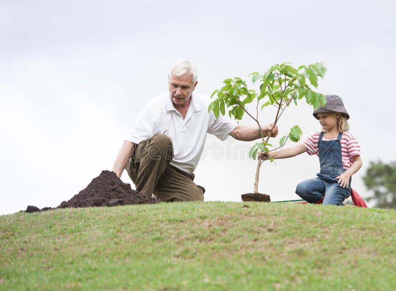Abuelo y niño que plantan el árbol en unidad de la familia del parque imagen de archivo libre de regalías