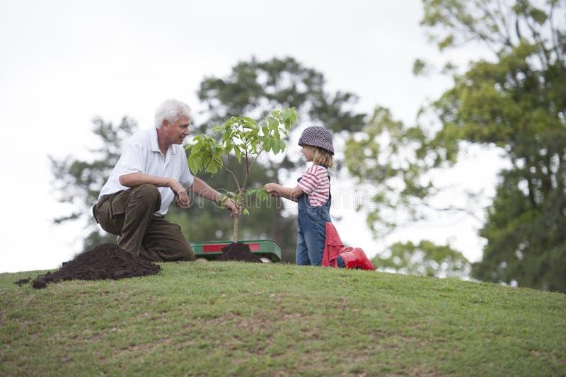 Abuelo y niño que plantan el árbol en unidad de la familia del parque fotos de archivo